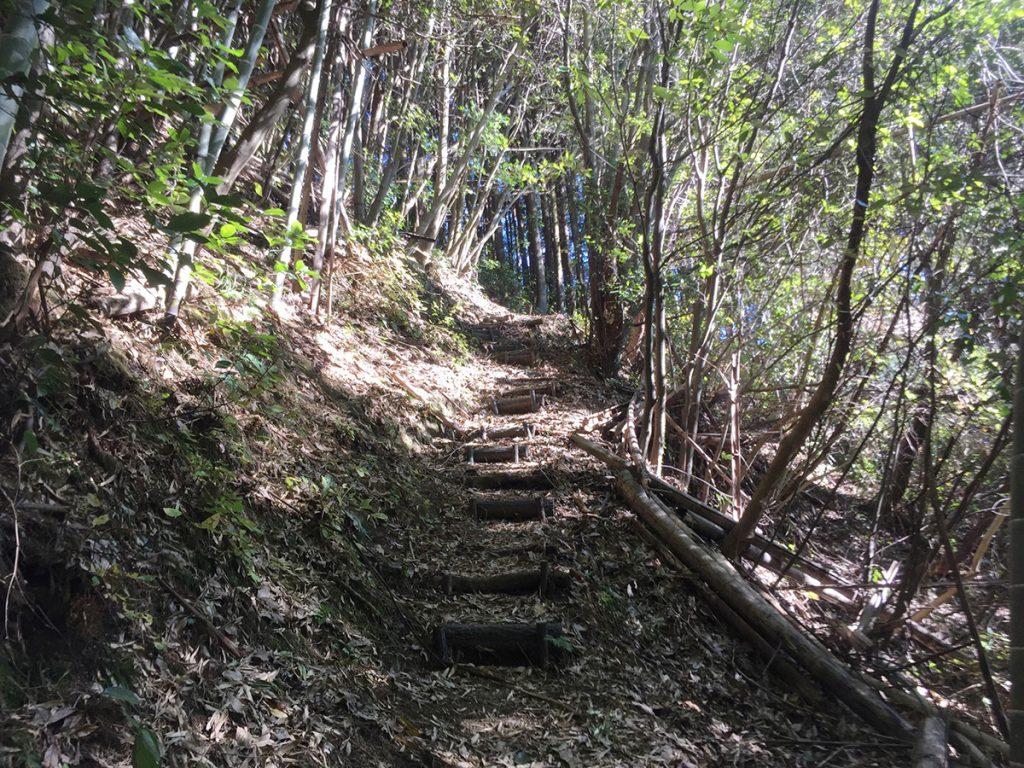石谷山ハイキングコース 森林浴を愉しめる道