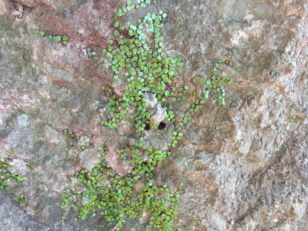 びく石ハイキングコース-顔の石