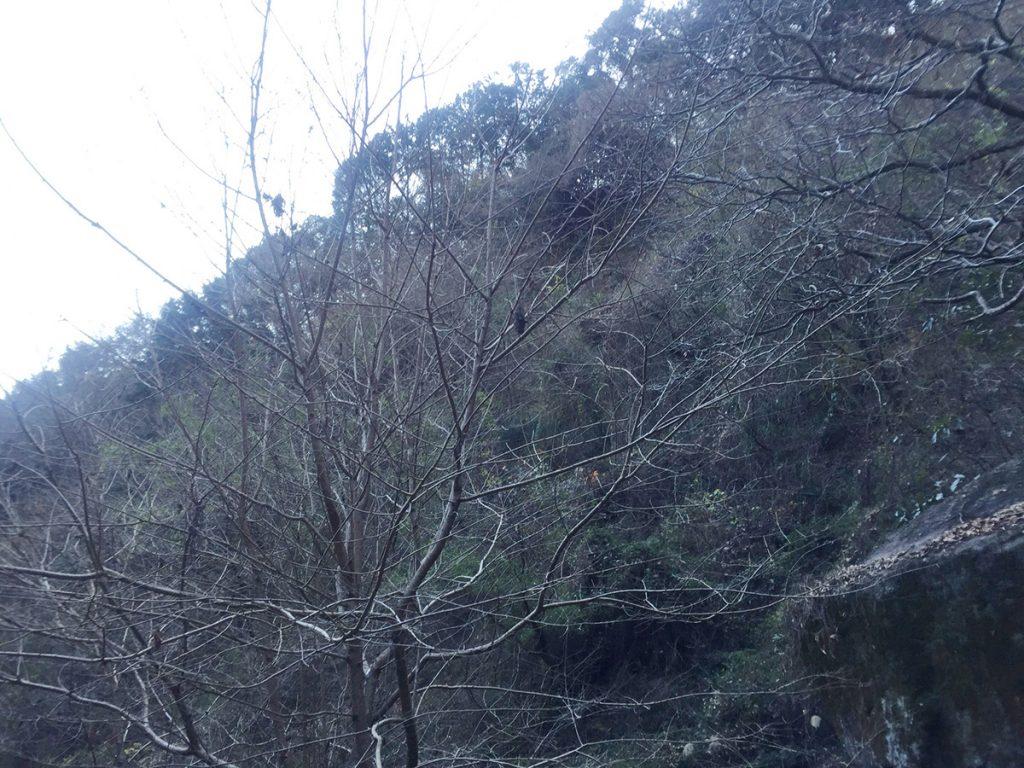 石谷山 八十八石 ハイキングコース 日陰になるのが早い。