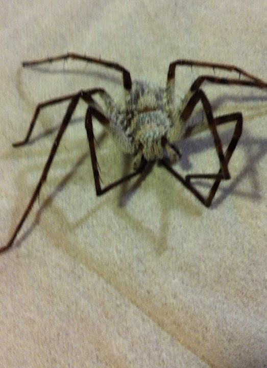 ドラッグストア最強 殺虫剤 クモとゴキブリに!