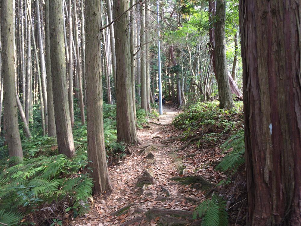 日本平ハイキングコース-落ち葉の道