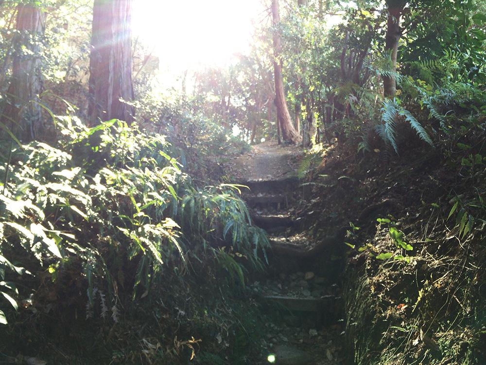日本平ハイキングコース-上りの階段