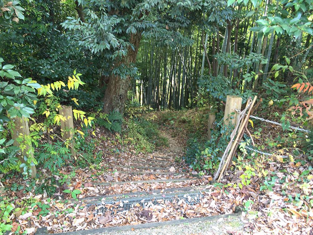 nihondaira-hikingcourse35