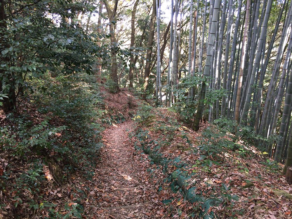 nihondaira-hikingcourse36
