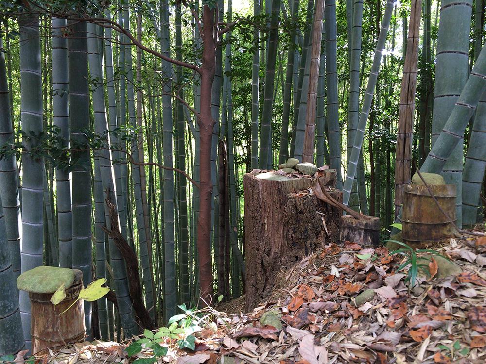 nihondaira-hikingcourse37