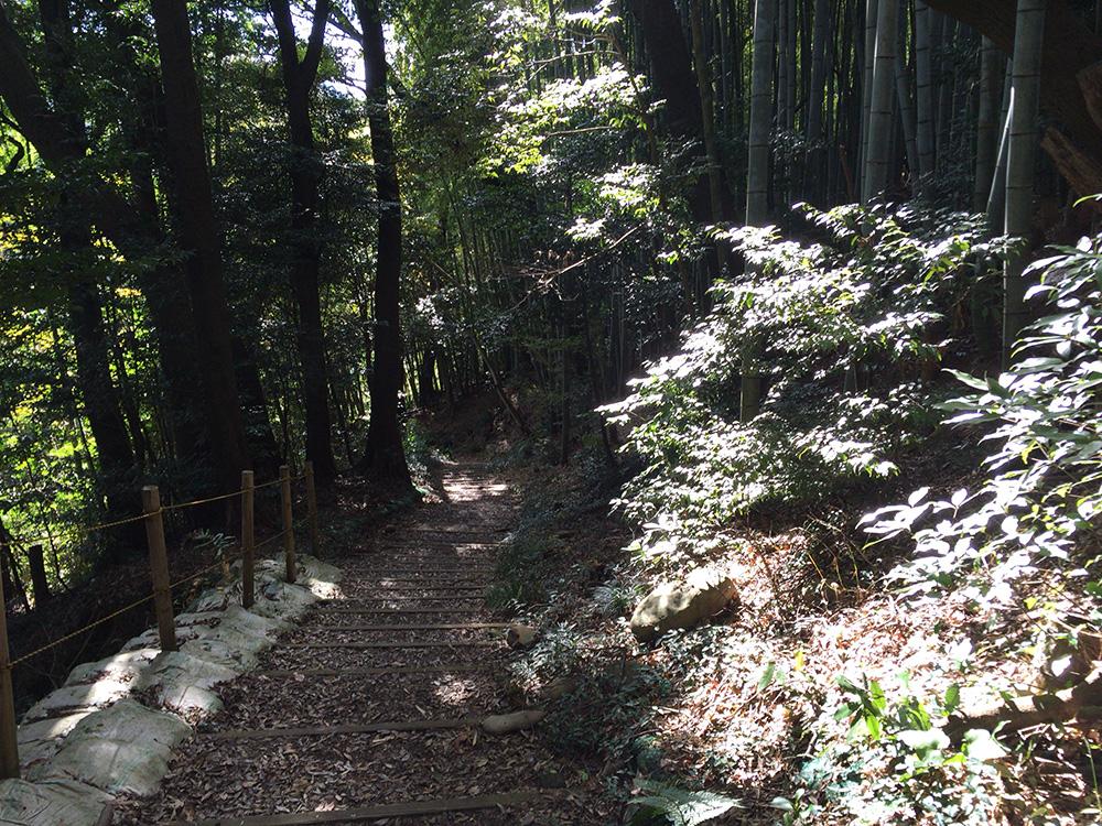 nihondaira-hikingcourse38