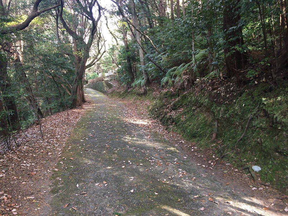 nihondaira-hikingcourse56