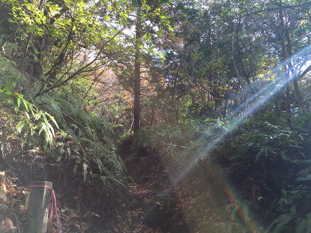 日本平ハイキングコース-切り通し