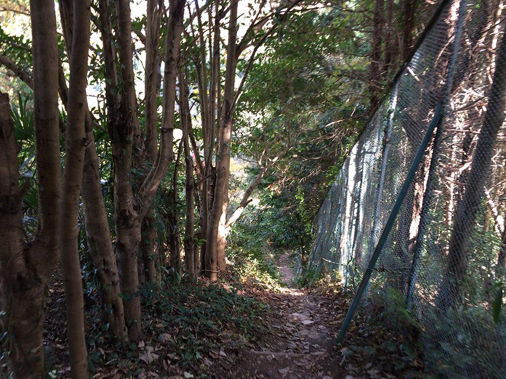 日本平ハイキングコース-遊歩道