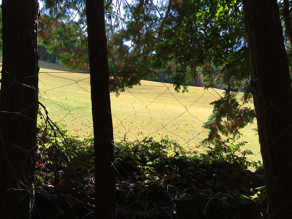 日本平ハイキングコース-ゴルフ場を斜めに