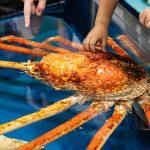 竹島水族館の深海タッチプール!タカアシガニを触れるよ!